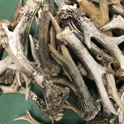 1Kg Roedeer antlers old ugly used with holes, hunting, roe deer, horns UK