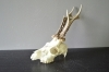 264CA Trophy roedeer 305g. Hunting. Collection. Decoration. Fireplace