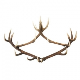 Coat rack with real red deer antlers. 100x75cm 119915