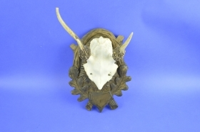 001TSK Trophy sika deer. Hunting. Decoration. Fireplace. Chalet.
