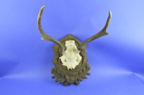 002CER Trophy deer. Hunting. Decoration. Fireplace. Chalet.